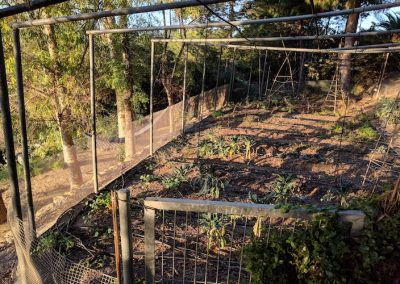800x500Vegetable garden copy