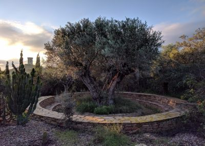 Olivetreeandtower