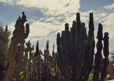cactus faded2