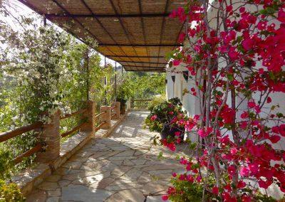 morroccan terrace bouganvilla