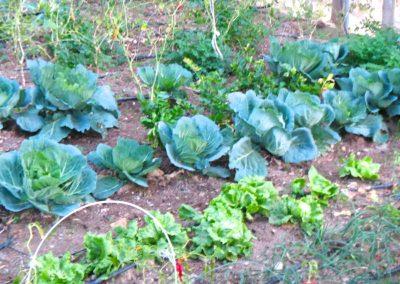 spain veg garden